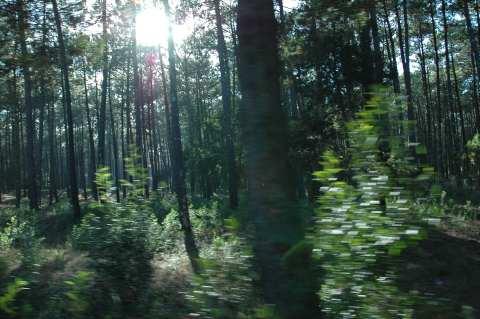 perdida en los bosques